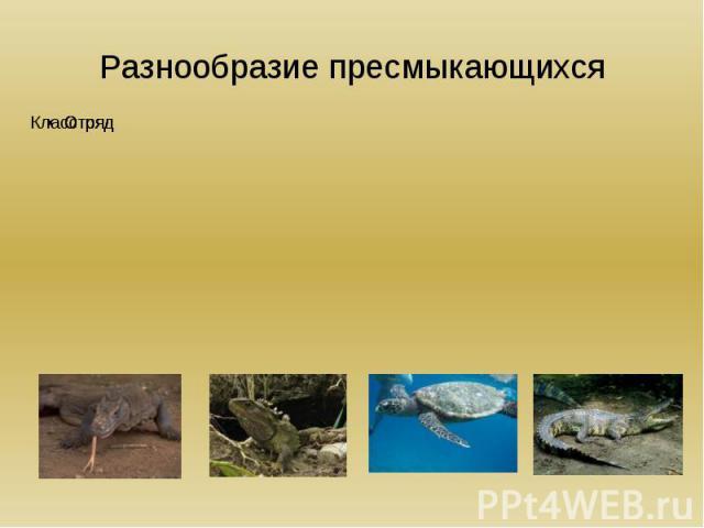 Разнообразие пресмыкающихся КлассРептилии ОтрядЧешуйчатыеОтрядКлювоголовыеОтрядКрокодилыОтряд Черепахи