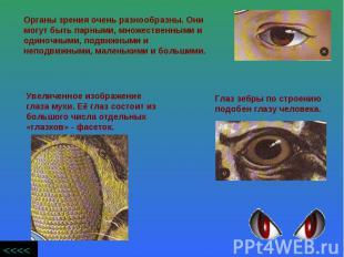 Органы зрения очень разнообразны. Они могут быть парными, множественными и одино