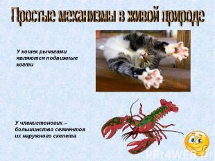 Простые механизмы в живой природе У кошек рычагами являются подвижные когти У чл