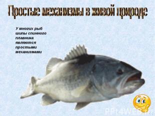Простые механизмы в живой природе У многих рыб шипы спинного плавника являются п