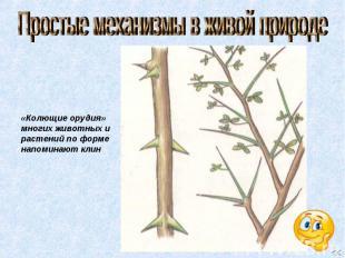 Простые механизмы в живой природе «Колющие орудия» многих животных и растений по