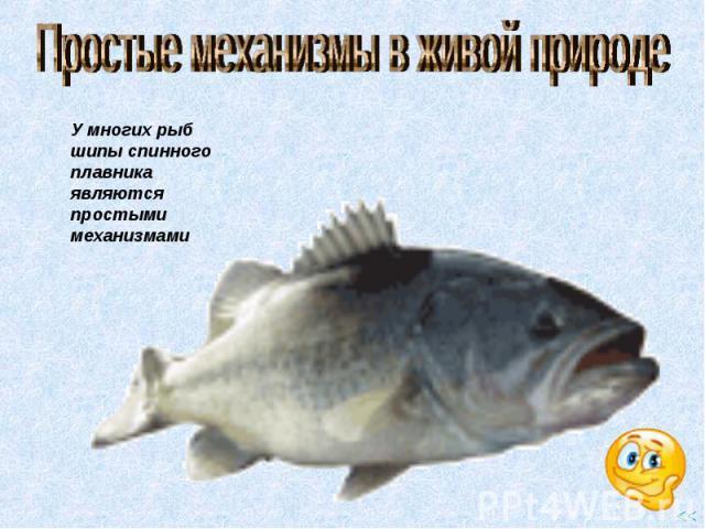 Простые механизмы в живой природе У многих рыб шипы спинного плавника являются простыми механизмами