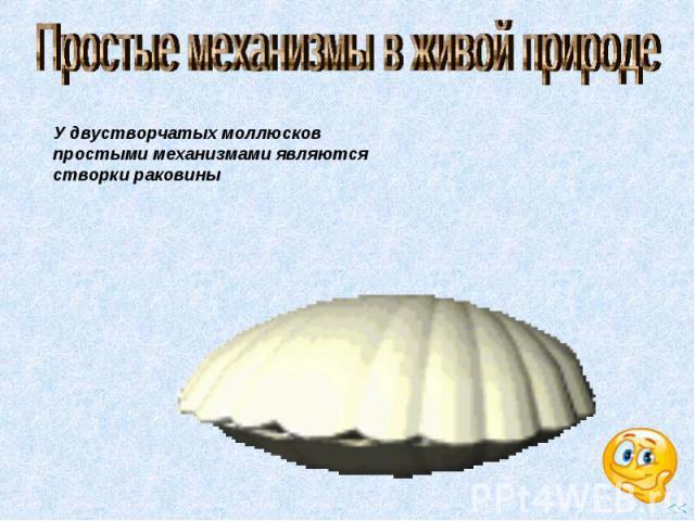 Простые механизмы в живой природе У двустворчатых моллюсков простыми механизмами являются створки раковины