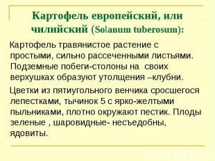 Картофель европейский, или чилийский (Solanum tuberosum): Картофель травянистое