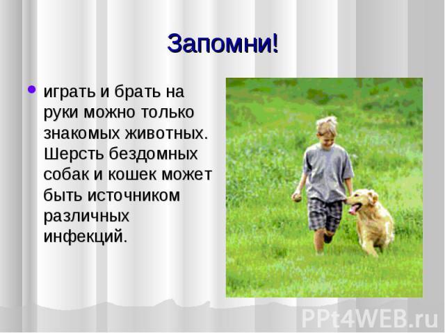 играть и брать на руки можно только знакомых животных. Шерсть бездомных собак и кошек может быть источником различных инфекций.