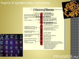 Карта Х-хромосомы человека