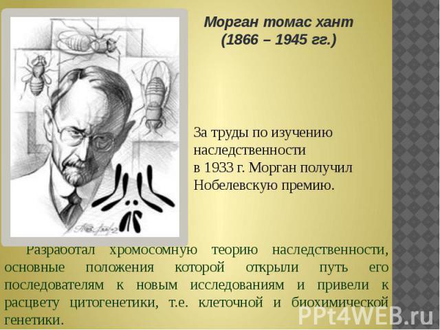 Морган томас хант (1866 – 1945 гг.) За труды по изучению наследственности в 1933 г. Морган получил Нобелевскую премию. Разработал хромосомную теорию наследственности, основные положения которой открыли путь его последователям к новым исследованиям и…