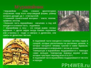 Муравейник Муравейник очень сложное архитектурное сооружение чаще всего конусови
