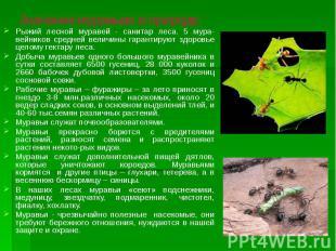 Значение муравьев в природе: Рыжий лесной муравей - санитар леса. 5 мура-вейнико