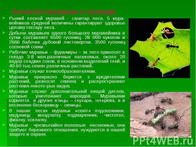 Значение муравьев в природе: Рыжий лесной муравей - санитар леса. 5 мура-вейников средней величины гарантируют здоровье целому гектару леса. Добыча муравьев одного большого муравейника в сутки составляет 6500 гусениц, 28 000 куколок и 2660 бабочек д…