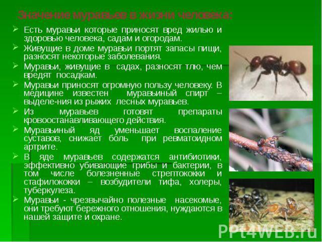 Значение муравьев в жизни человека: Есть муравьи которые приносят вред жилью и здоровью человека, садам и огородам. Живущие в доме муравьи портят запасы пищи, разносят некоторые заболевания. Муравьи, живущие в садах, разносят тлю, чем вредят посадка…