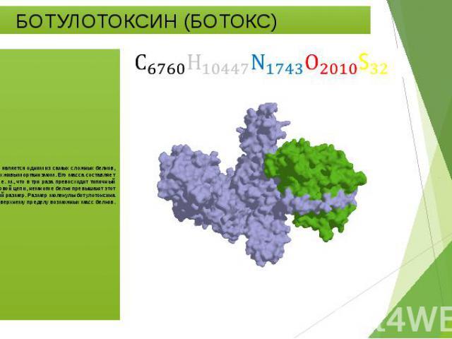 БОТУЛОТОКСИН (БОТОКС) Ботулотоксин является одним из самых сложных белков, синтезируемых живым организмом. Его масса составляет около 150 тысяч а. e. м., что в три раза превосходит типичный размер белковой цепи, немногие белки превышают этот средний…