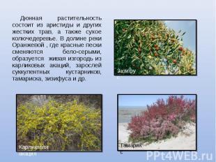 Дюнная растительность состоит из аристиды и других жестких трав, а также сухое к
