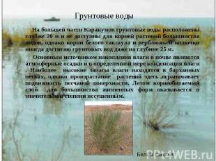На большей части Каракумов грунтовые воды расположены глубже 20 м и не доступны