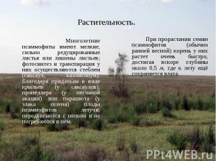 Многолетние псаммофиты имеют мелкие, сильно редуцированные листья или лишены лис