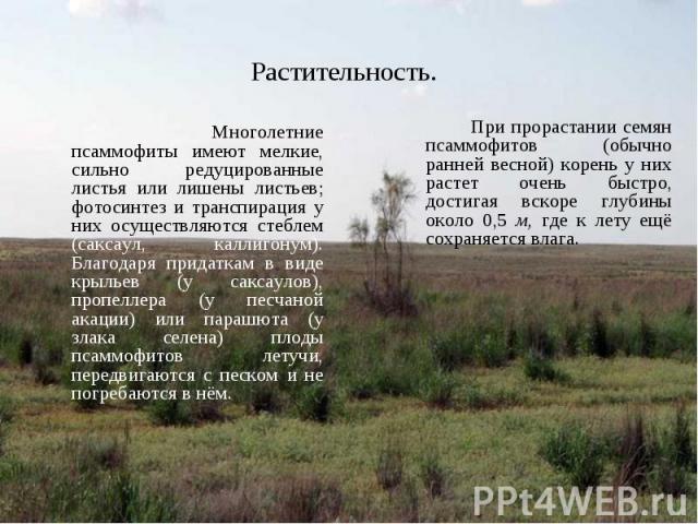 Многолетние псаммофиты имеют мелкие, сильно редуцированные листья или лишены листьев; фотосинтез и транспирация у них осуществляются стеблем (саксаул, каллигонум). Благодаря придаткам в виде крыльев (у саксаулов), пропеллера (у песчаной акации) или …