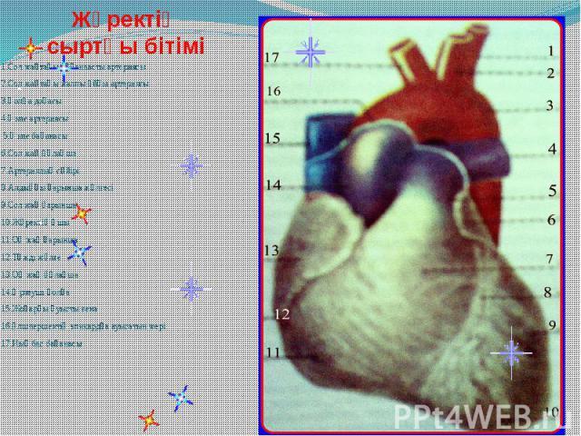 Жүректің сыртқы бітімі 1.Сол жақтағы бұғанаасты артериясы 2.Сол жақтағы жалпы ұйқы артериясы 3.Қолқа доғасы 4.Өкпе артериясы 5.Өкпе бағанасы 6.Сол жақ құлақша 7.Артериялық сүйірі 8.Алдыңғы қарынша жүлгесі 9.Сол жақ қарынша 10.Жүректің ұшы 11.Оң жақ …