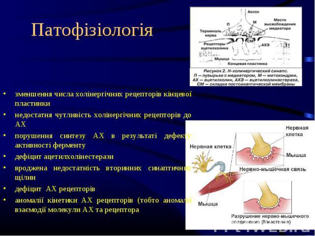 зменшення числа холінергічних рецепторів кінцевої пластинки недостатня чутливість холінергічних рецепторів до АХ порушення синтезу АХ в результаті дефекту активності ферменту дефіцит ацетилхолінестерази вроджена недостатність вторинних синаптичних щ…