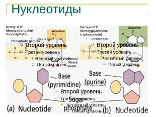 Нуклеотиды
