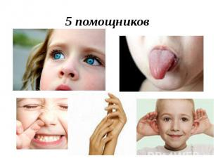 5 помощников