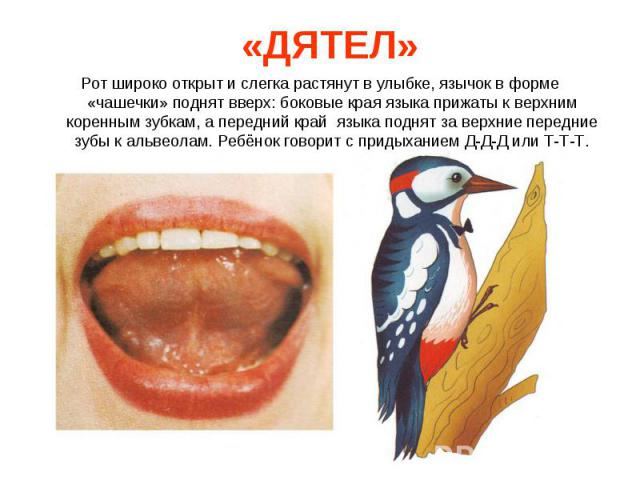 Рот широко открыт и слегка растянут в улыбке, язычок в форме «чашечки» поднят вверх: боковые края языка прижаты к верхним коренным зубкам, а передний край языка поднят за верхние передние зубы к альвеолам. Ребёнок говорит с придыханием Д-Д-Д или Т-Т…