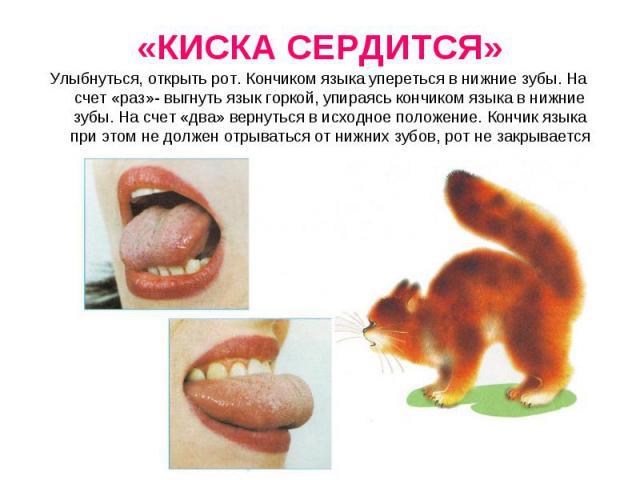 Улыбнуться, открыть рот. Кончиком языка упереться в нижние зубы. На счет «раз»- выгнуть язык горкой, упираясь кончиком языка в нижние зубы. На счет «два» вернуться в исходное положение. Кончик языка при этом не должен отрываться от нижних зубов, рот…