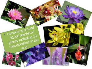 Containing around 30,000 species of plants, including 13 species extinct in the