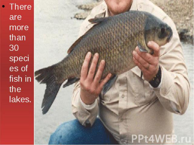 There are more than 30 species of fish in the lakes.