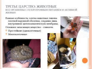 Важная особенность: клетка животных лишена плотной наружной оболочки, сохраняя л