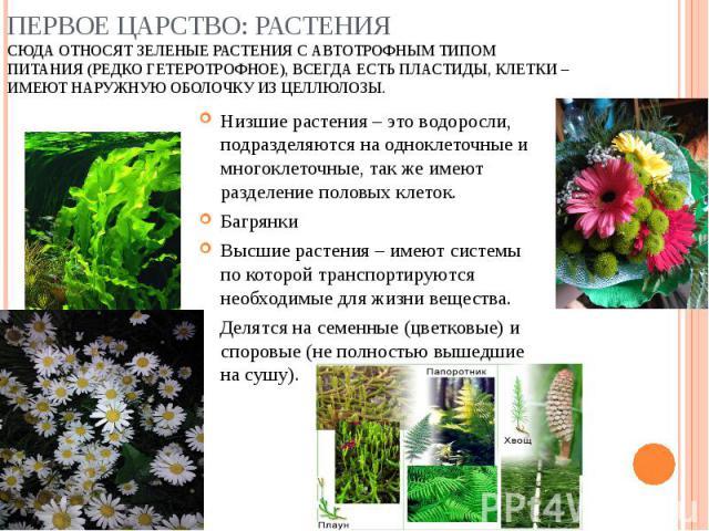 Низшие растения – это водоросли, подразделяются на одноклеточные и многоклеточные, так же имеют разделение половых клеток. Низшие растения – это водоросли, подразделяются на одноклеточные и многоклеточные, так же имеют разделение половых клеток. Баг…