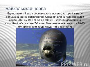 Байкальская нерпаЕдинственный вид пресноводного тюленя, который в мире больше ни