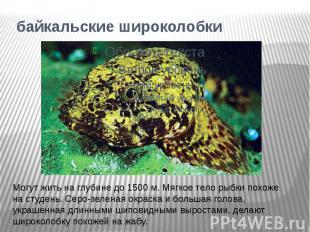 байкальские широколобкиМогут жить на глубине до 1500 м. Мягкое тело рыбки похоже
