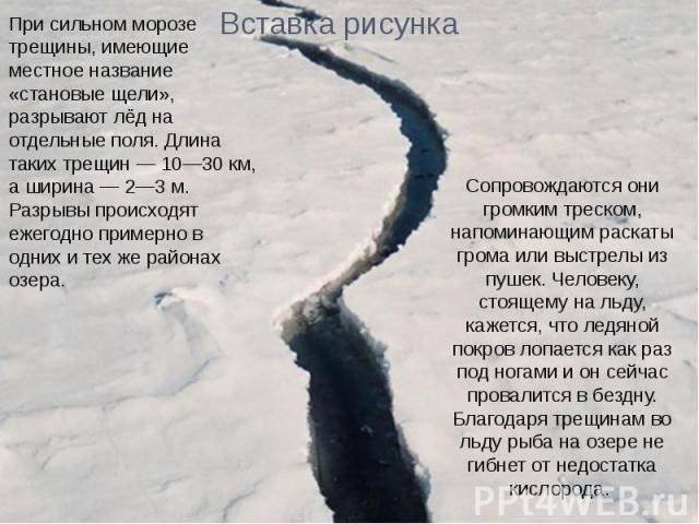 При сильном морозе трещины, имеющие местное название «становые щели», разрывают лёд на отдельные поля. Длина таких трещин — 10—30 км, а ширина — 2—3 м. Разрывы происходят ежегодно примерно в одних и тех же районах озера.