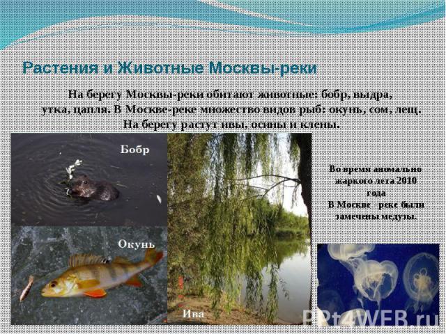 Растения и Животные Москвы-реки