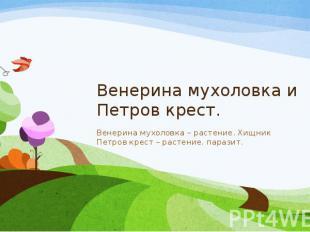 Венерина мухоловка и Петров крест. Венерина мухоловка – растение. Хищник Петров
