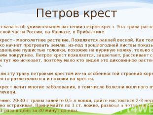 Петров крест Хочу рассказать об удивительном растении петров крест. Эта трава ра
