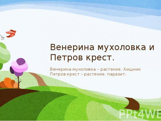 Венерина мухоловка и Петров крест. Венерина мухоловка – растение. Хищник Петров крест – растение. паразит.