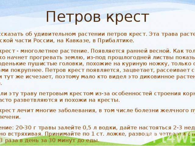 Петров крест Хочу рассказать об удивительном растении петров крест. Эта трава растет в европейской части России, на Кавказе, в Прибалтике. Петров крест - многолетнее растение. Появляется ранней весной. Как только солнышко начнет прогревать землю, из…