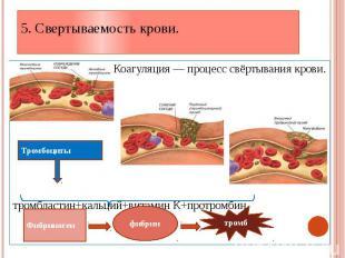 5. Свертываемость крови. Коагуляция — процесс свёртывания крови. тромбластин+кал