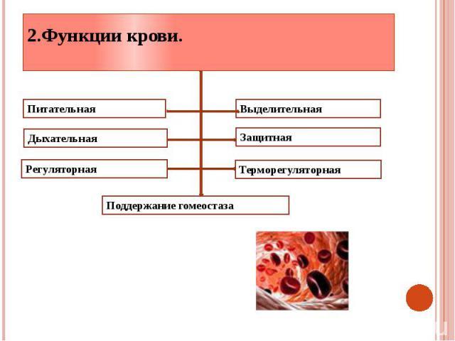 2.Функции крови.