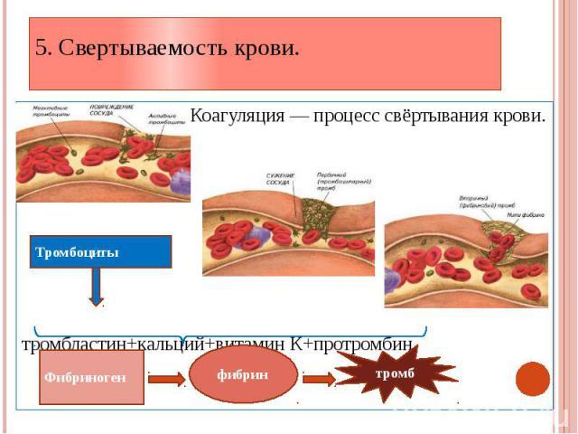 5. Свертываемость крови. Коагуляция — процесс свёртывания крови. тромбластин+кальций+витамин К+протромбин