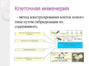 Клеточная инженерия - метод конструирования клеток нового типа путем гибридизаци