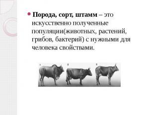 Порода, сорт, штамм – это искусственно полученные популяции(животных, растений,