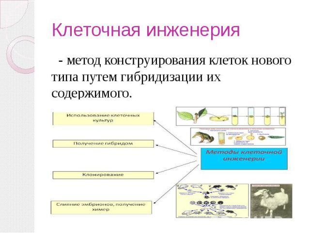 Клеточная инженерия - метод конструирования клеток нового типа путем гибридизации их содержимого.