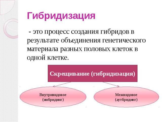 Гибридизация - это процесс создания гибридов в результате объединения генетического материала разных половых клеток в одной клетке.