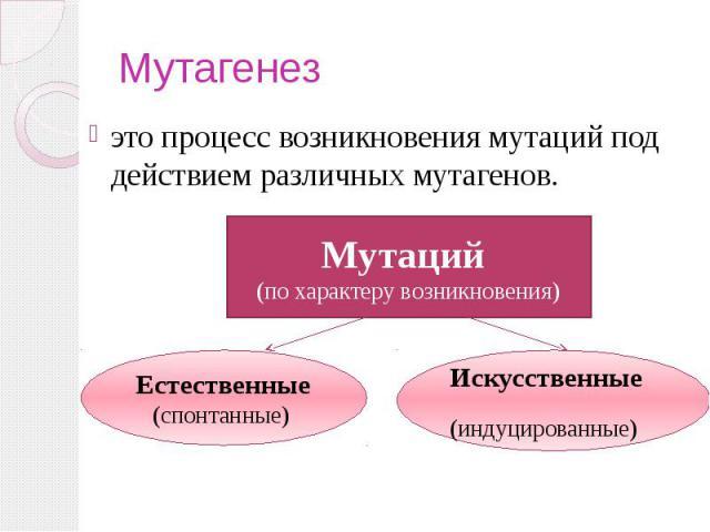 Мутагенез это процесс возникновения мутаций под действием различных мутагенов.