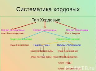 Систематика хордовых Тип Хордовые Подтип Бесчерепные Подтип Позвоночные Подтип О