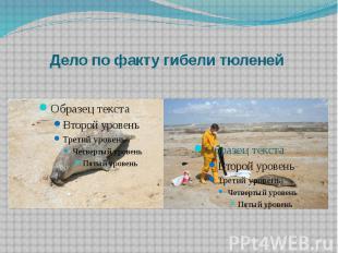 Дело по факту гибели тюленей
