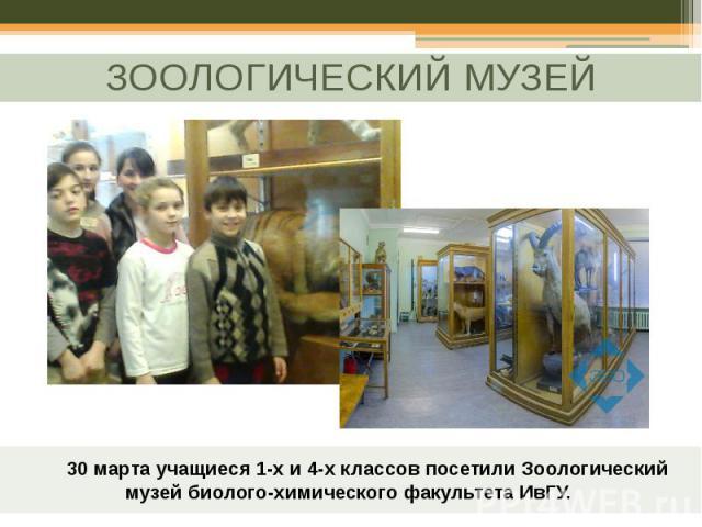 30 марта учащиеся 1-х и 4-х классов посетили Зоологический музей биолого-химического факультета ИвГУ.