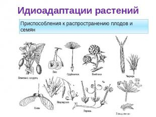 Идиоадаптации растений